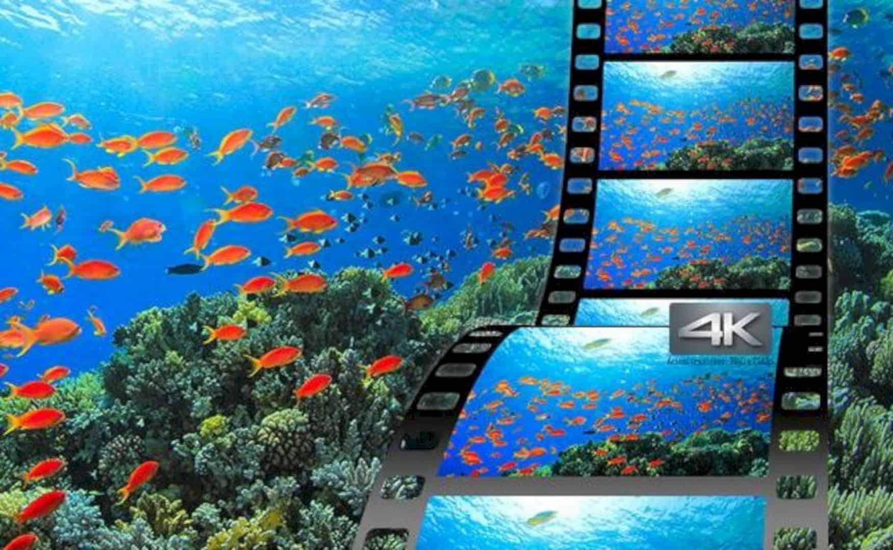 Panasonic LUMIX TS7 Waterproof Tough Camera 4